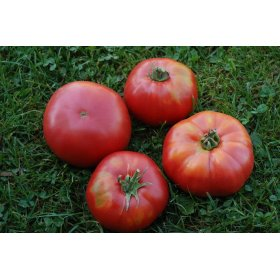 Graines BIO Tomate Rouge Géante d'Orenbourg