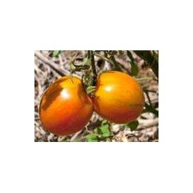 Graines Bio Tomate Cerise...